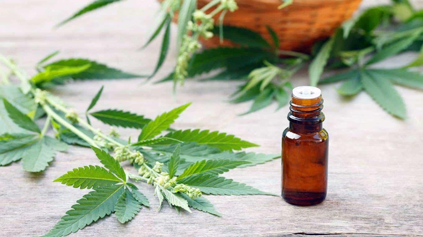Vinhedo recebe roda de conversa sobre o uso medicinal da Cannabis - Jornal de Vinhedo